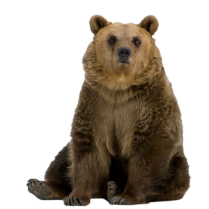Ours-brun-800px